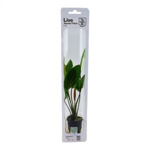Tropica - Echinodorus 'Rose' - Pot in single package
