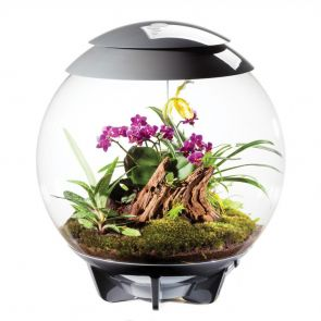 biOrb AIR 60 - grey terrarium - vivarium