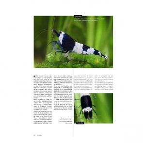 Dennerle Breeders and Keepers magazine 1.