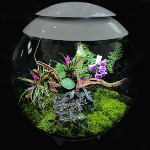 biOrb AIR 60 - black terrarium