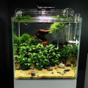 Green Aqua Opti-White (Clear Glass) Aquarium - 27 liters, 30x30x30 cm - Cube (30-C)