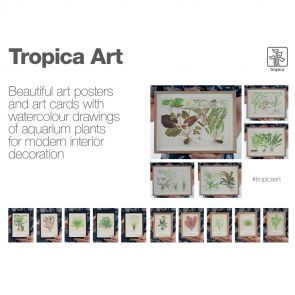 Tropica Art Cards 5 pc - 13x18 cm (Cyperus)