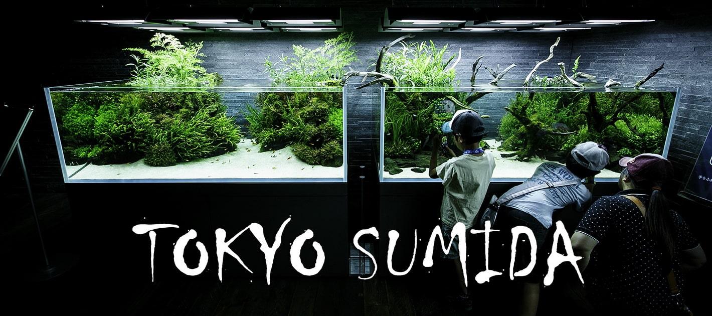 A Sumida akvárium története 1.rész
