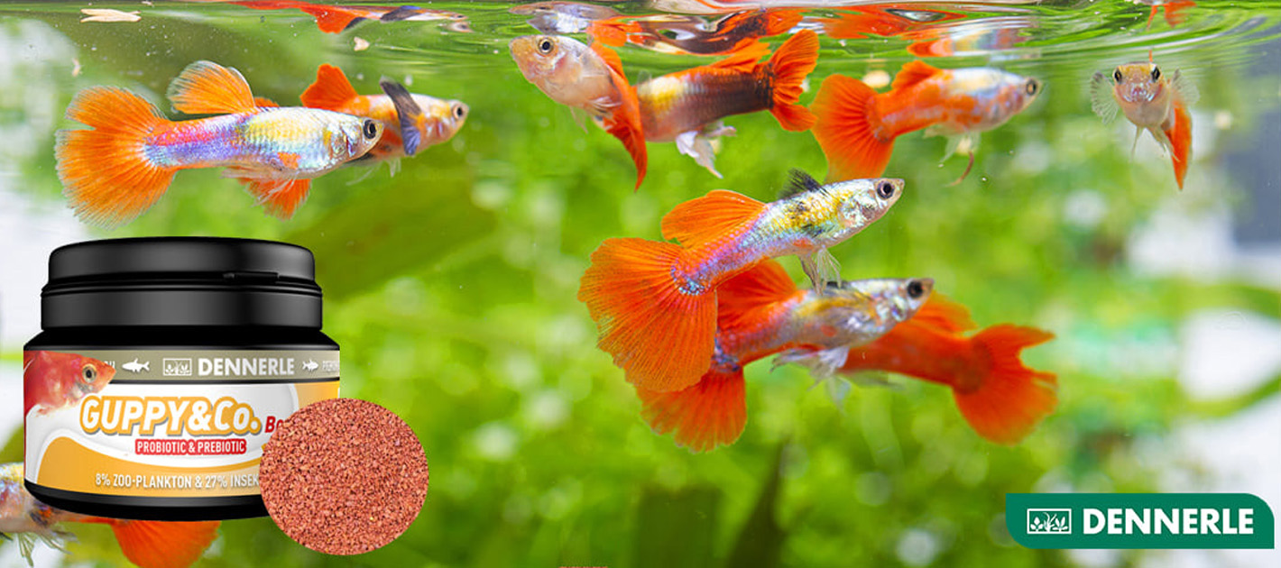 When and how much should we feed our fish?