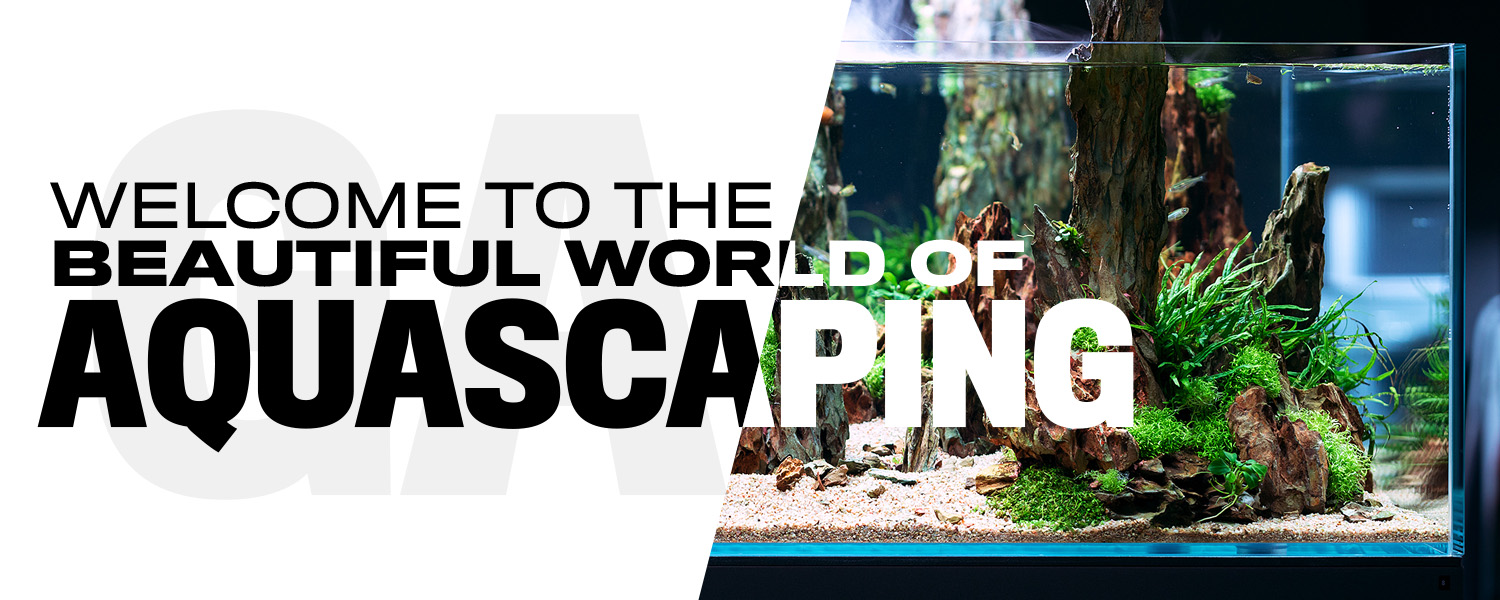 Welcome to the Beautiful World of Aquascaping